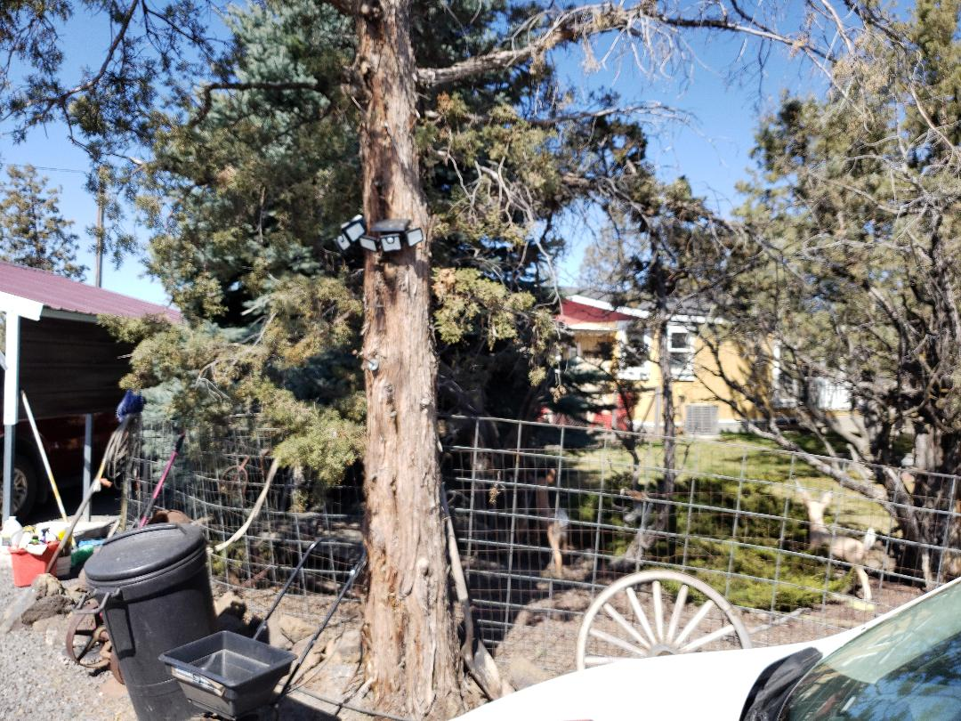 Redmond, OR - Bidding to replace the existing composition roofing due to wind damage.