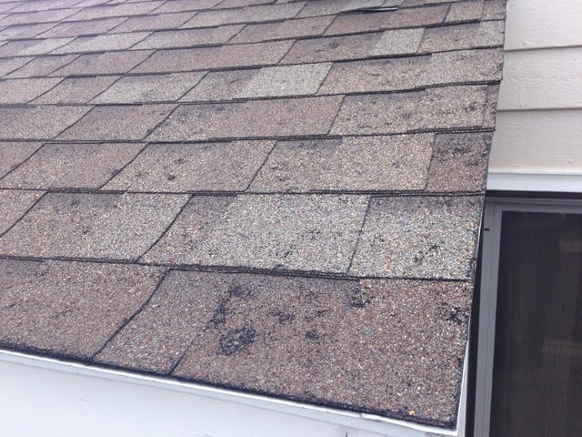 Longmont, CO - What a crazy week!  So much snow!  And next week the weather forecast looks like we could get thunderstorms.  Is your roof ready for hail?  Ask us about Class IV Impact Resistant Shingles.  This roof in Longmont shows sure signs of hail damage.