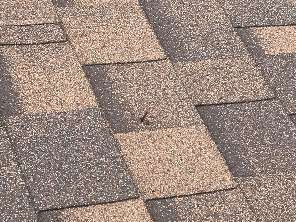 Louisville, KY - Nail pops will cause any aged roof to leak.