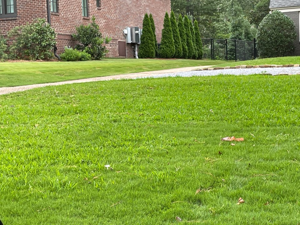 Montgomery, AL - Montgomery Alabama weed Control and Fertilization company. Target Exterminating and Lawn
