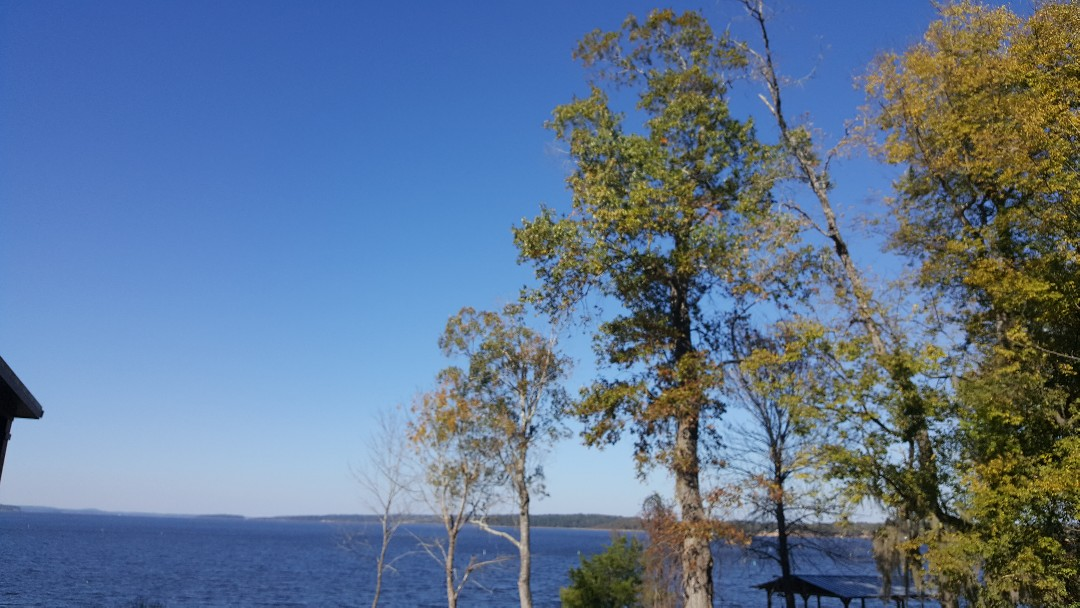 Many, LA - General pest control services for spiders and other household pest on the beautiful Toledo Bend Lake