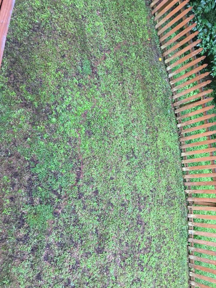 Greenville, SC - General pest treatment for ants