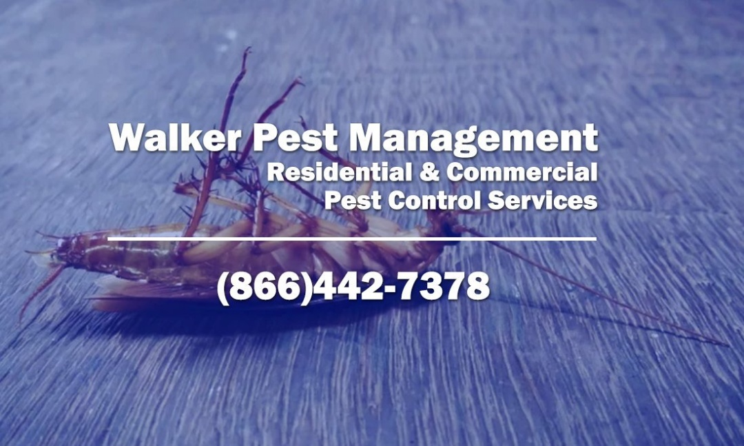 Restaurant & Bar Pest Management in Aiken SC - Walker Pest Management