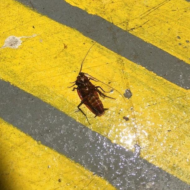 Greenville, SC - Commercial Pest Management Services - Walker Pest Management