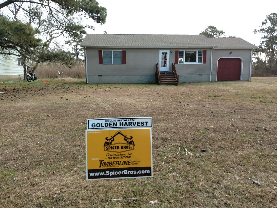 Chincoteague Island, VA - Spicer Bros Construction removed one layer of shingles in Chincoteague Island, VA and installed new GAF Timberline American Harvest. Golden Harvest in color.