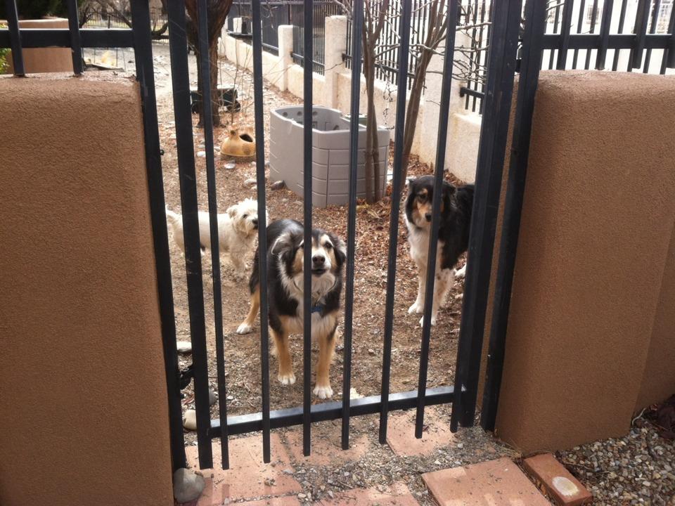 Rio Rancho, NM - Cleaning my three special doggies' yard!