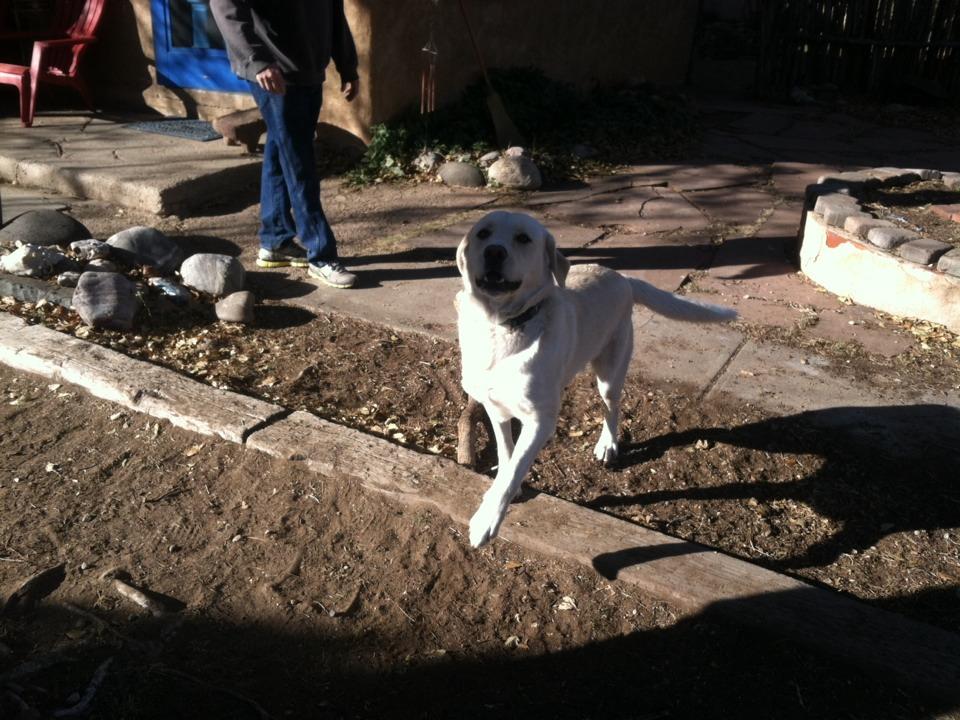 Santa Fe, NM - Making Chullo a happy doggie with his clean yard!