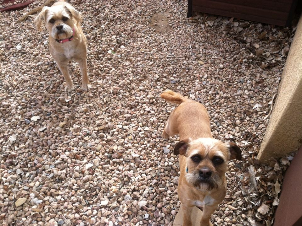 Albuquerque, NM - We love getting our yard cleaned!  And we get a treat too!