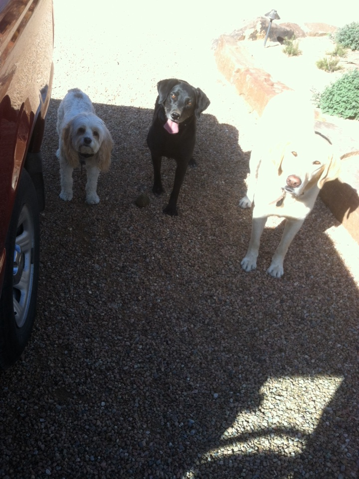 Santa Fe, NM - Cleaning yard of three of the sweetest dogs!!
