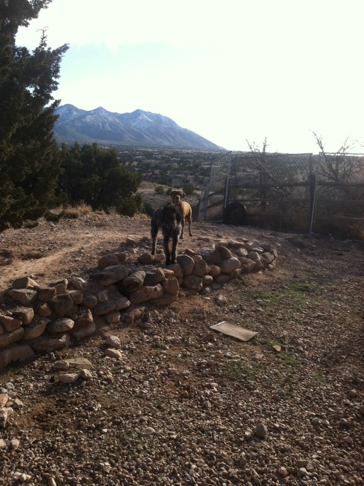 Placitas, NM - Cleaning beautiful yard, keeping it pet waste free