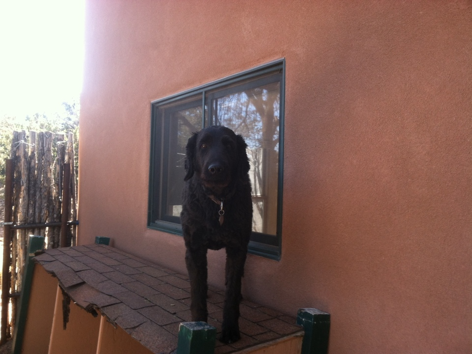 Santa Fe, NM - Helping keep Jake's yard poop-free!