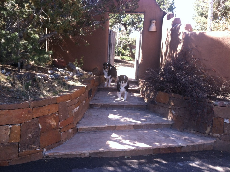 Santa Fe, NM - Cleaning a beautiful yard with sweet dogs!