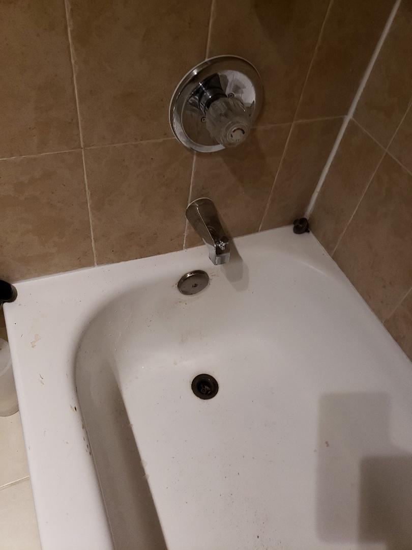 Pompano Beach, FL - Master bath tub drain clogged