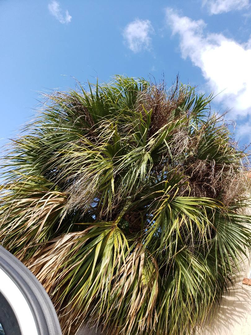 Pembroke Pines, FL - Microwave repair