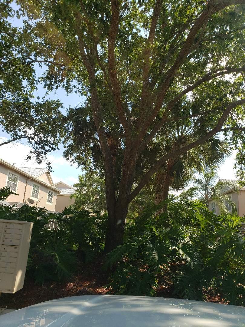 Weston, FL - Plumbing repairs