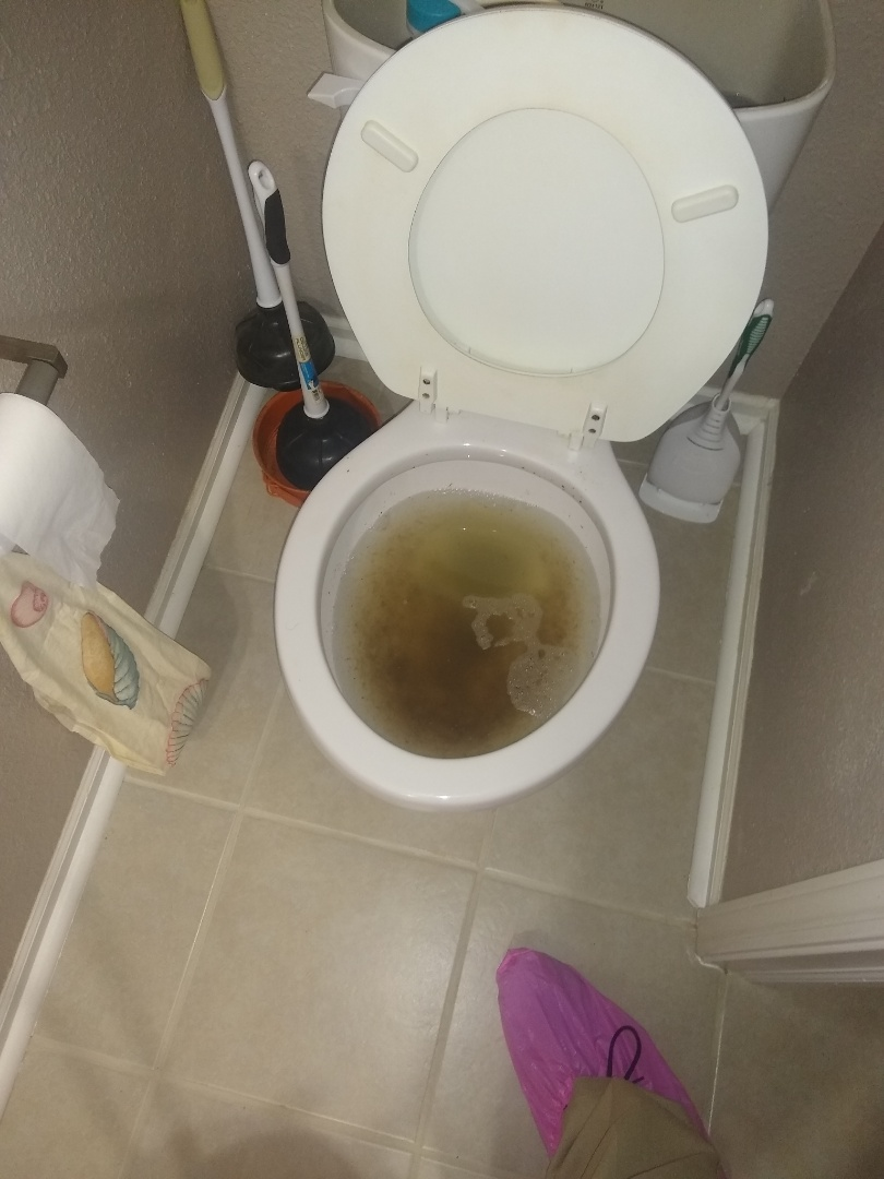 McCordsville, IN - Toilet clogged