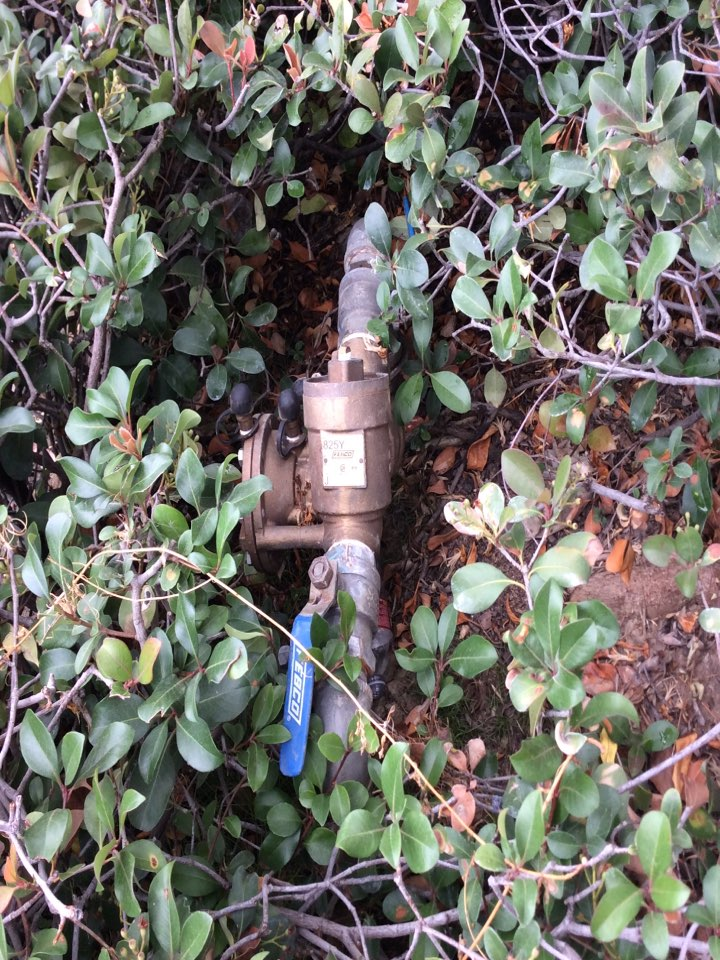 Rosemead, CA - Annual testing and certification of multiple backflow devices at multiple locations. Sometimes bushes can be the best form of theft protection