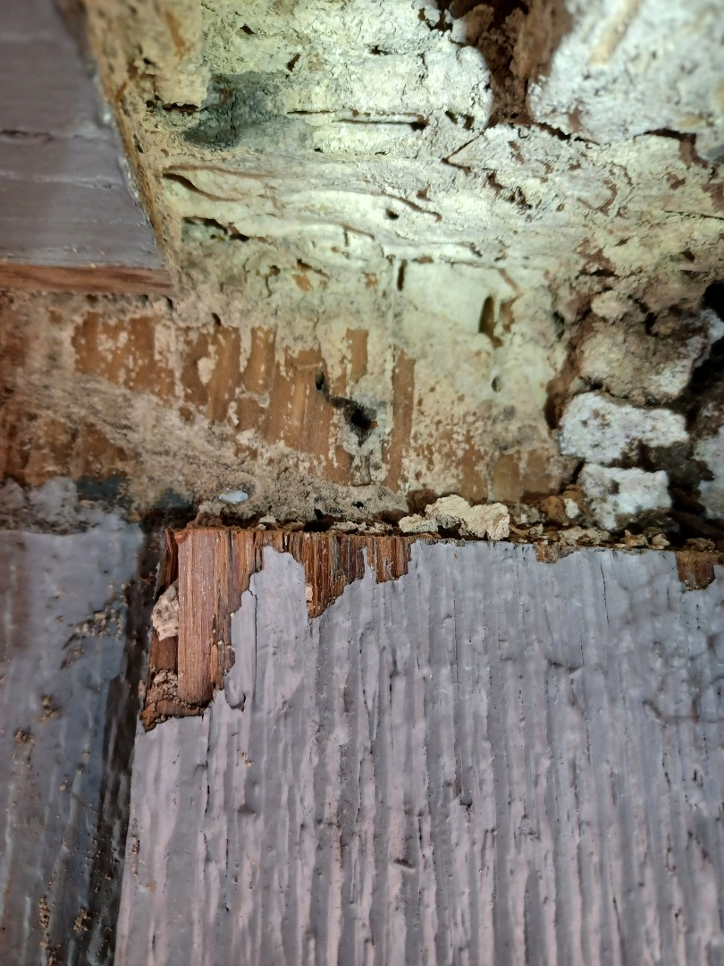 Beaumont, TX - Completing Formosan Termite Inspection in Beaumont Texas