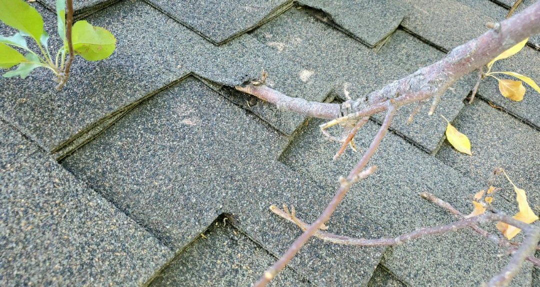 Centennial, CO - we are doing a roof inspection for this house in Centennial that has damage to the shingles from a tree rubbing on it in the wind. We will need to remove and replace with new shingles and trim the tree back to prevent more roof damage