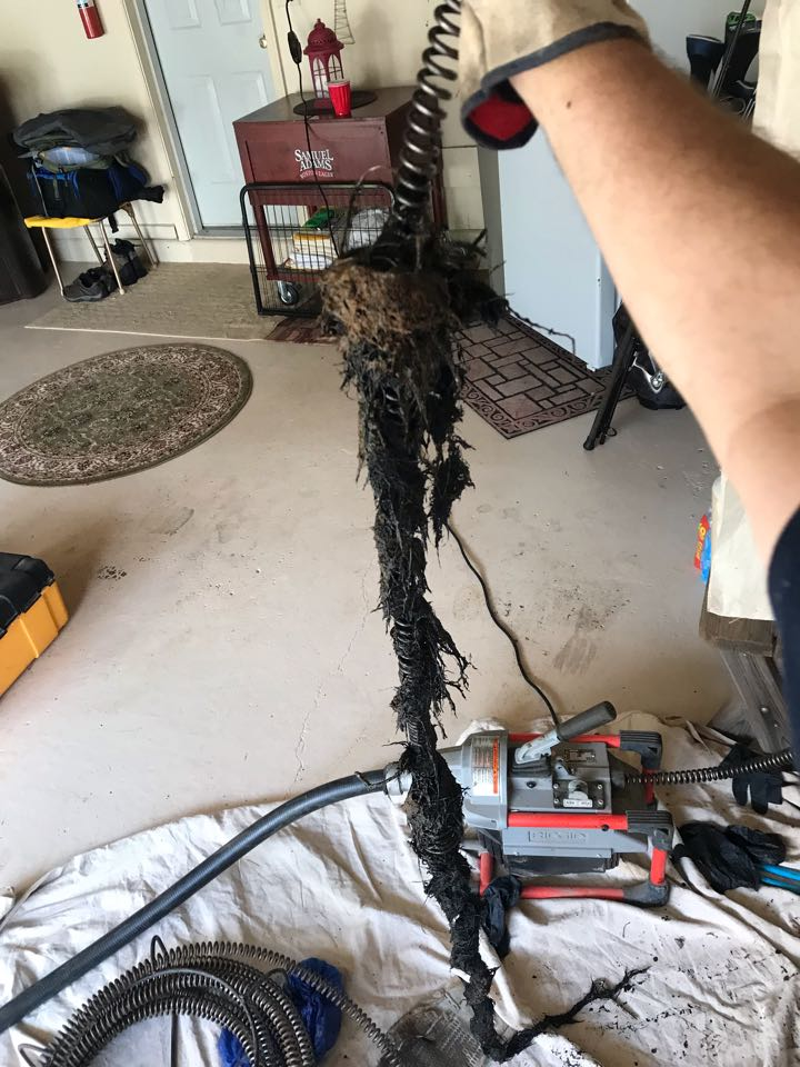 Harleysville, PA - Got roots. We will remove them. North Wales plumbers.