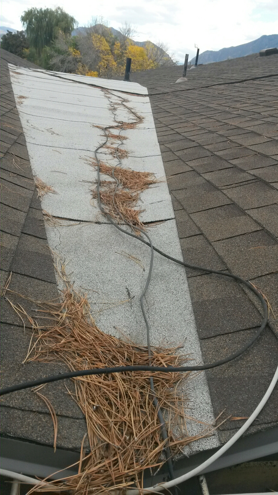 Draper, UT - Mold inspection in Sandy Utah. The picture is not the mold that we found, but of the roof which is one of the contributing factors. Ground water has been coming in the basement through the foundation. The ground near the home is saturated because of a negative slope towards the house and roof and rain gutter issues. A large section of the roof slopes toward a small rain gutter that is clogged from pi e needles and debris. It needs to be cleaned and monitored on a regular basis.