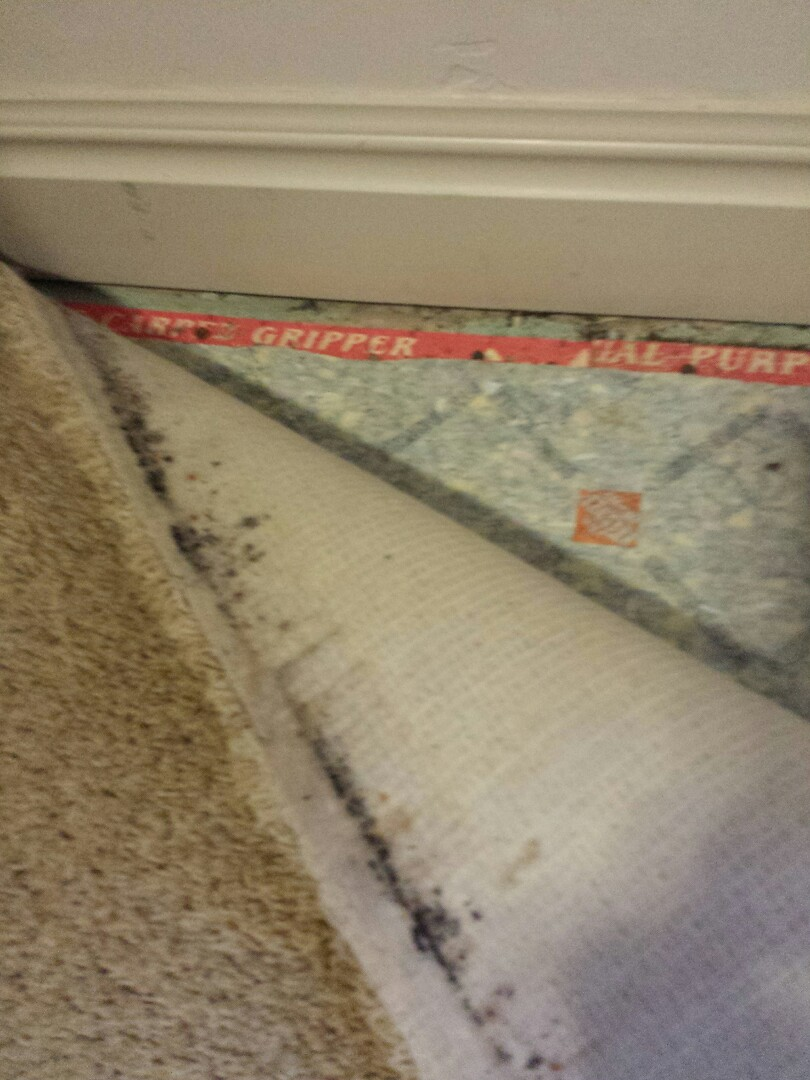 Fruit Heights, UT - Home inspection in Fruit Heights, Utah. There is likely to be mold in the bottom of this wall. The tack strip was replaced but the carpet was not replaced. The back if the carpet along the wall has some mold on it. There is likely to be more mild inside the wall.