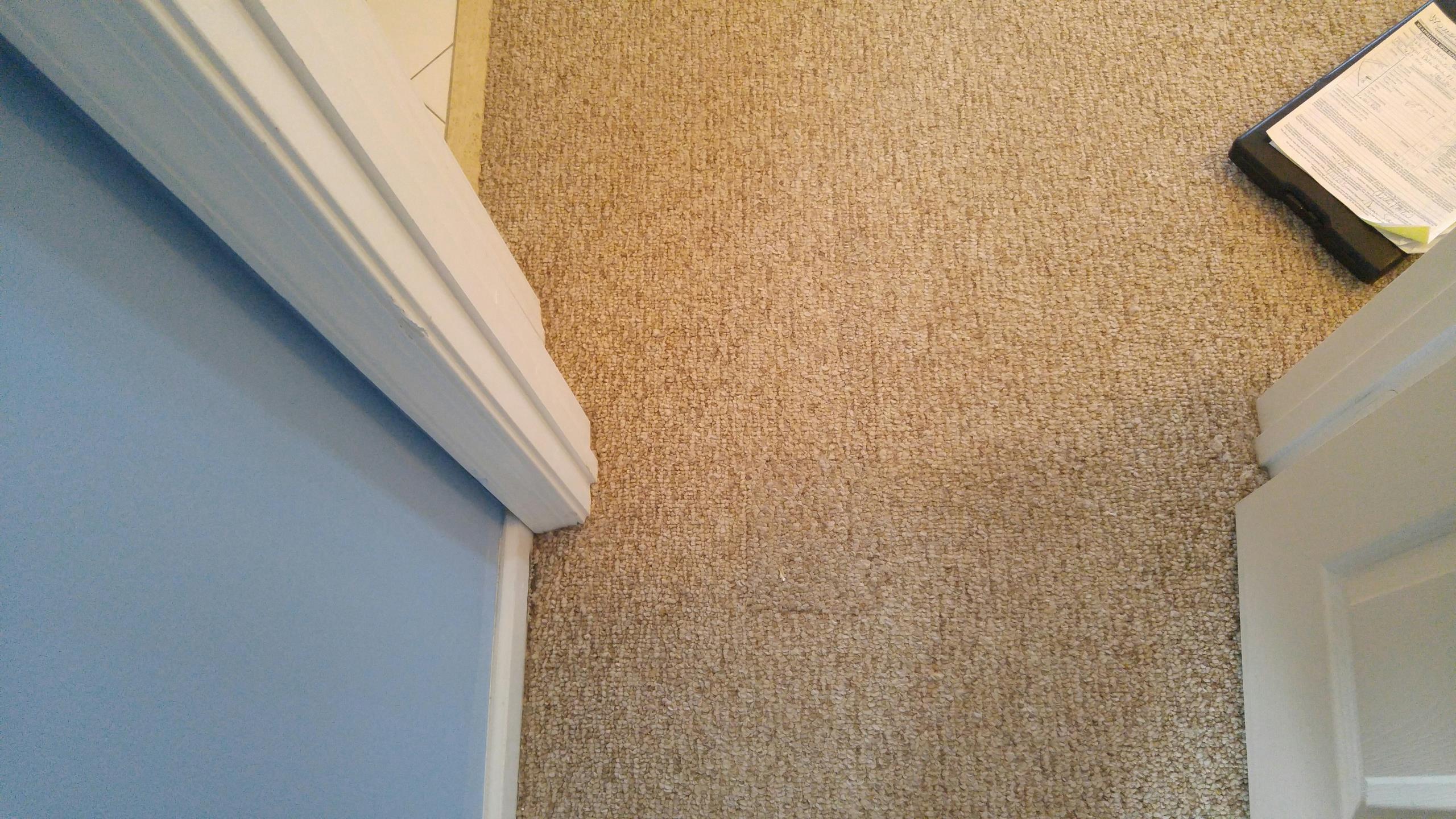 carpet repair Royal Palm Beach dog pull carpet apart..