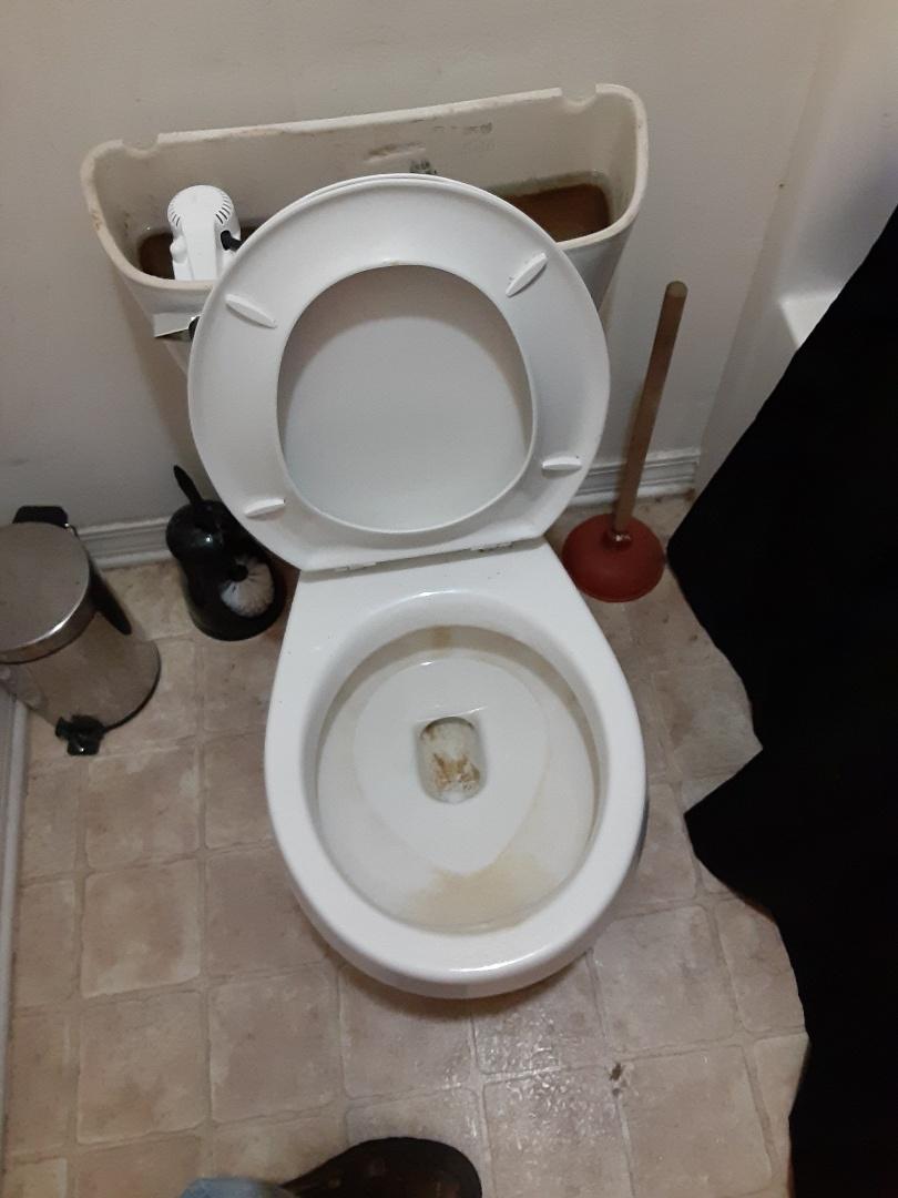Daphne, AL - Toilet stoppage