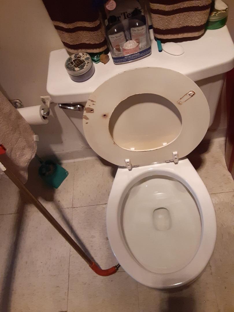 Mobile, AL - Toilet stoppage