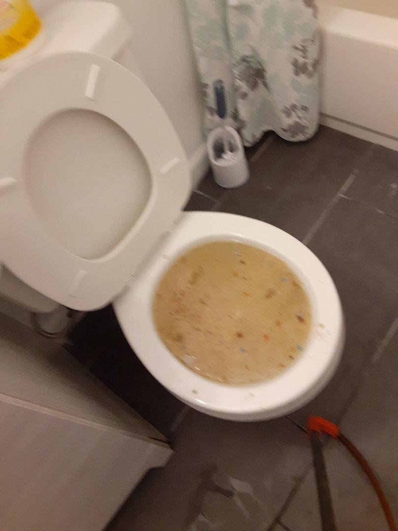 Daphne, AL - Plumbing service on toilet stoppage in Daphne Ala