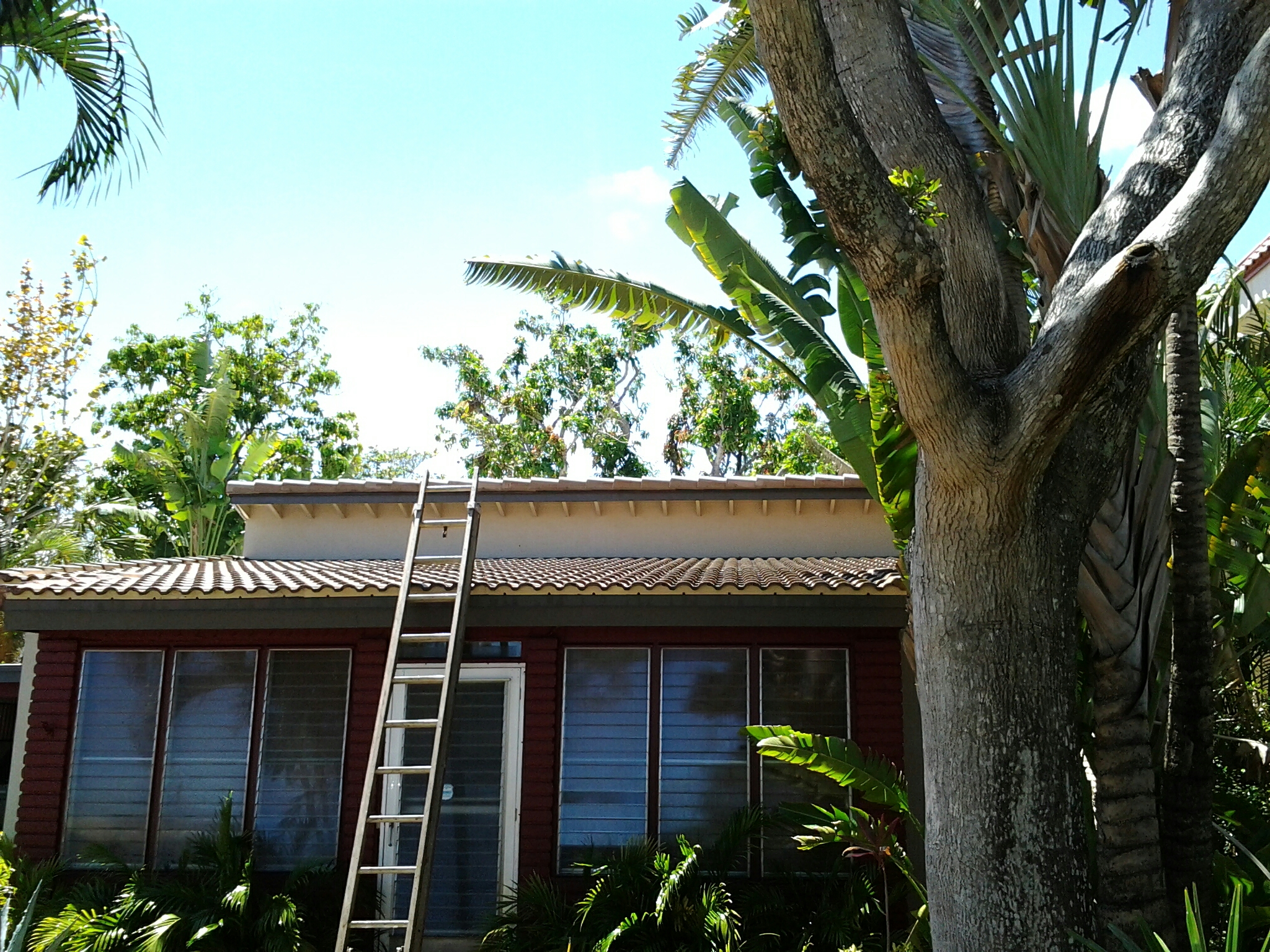 Fort Lauderdale, FL - Pressure clean and roofacide roof