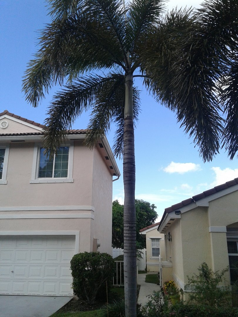 Coral Springs, FL - Roofing repair in Coral Springs by Duane and Israel from Earl W Johnston Roofing
