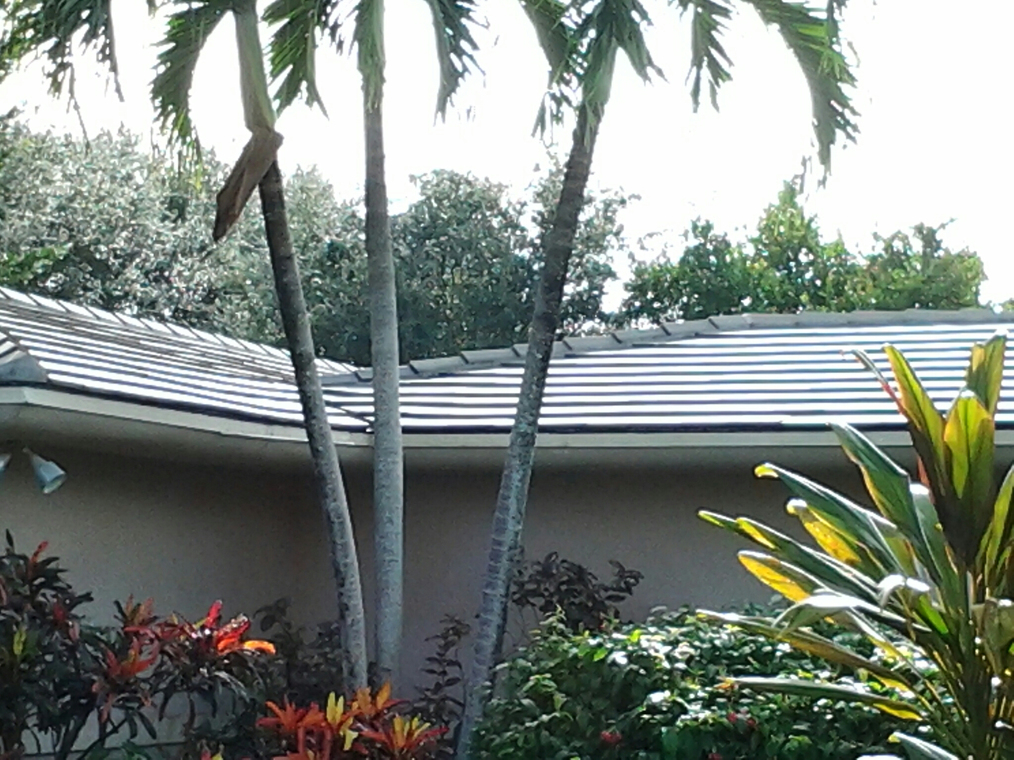 Pinecrest, FL - Pressure clean and roof a cide in Miami, Duane & Gary, From Earl W.Johnston Roofing Roof A Cide takes 100 % control of mold, mildew, fungus and algae taking over your roof.
