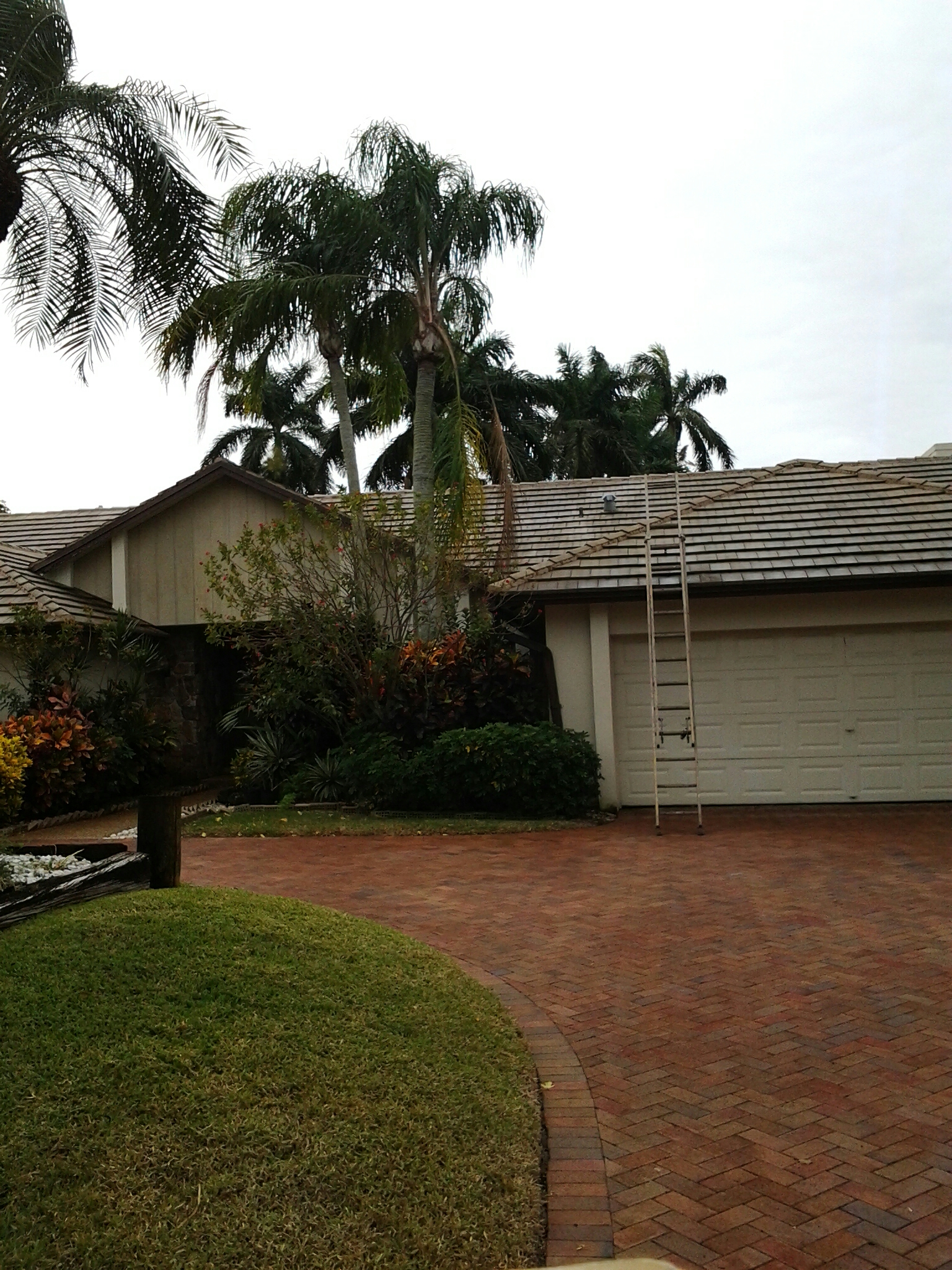 Plantation, FL - Pressure clean edges and roofacide roof