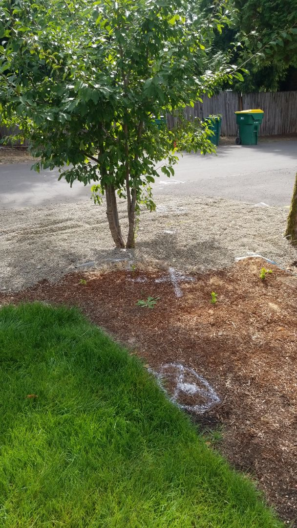 Portland, OR - Sewer line inspection