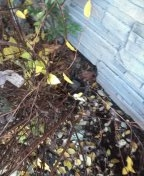 Beaverton, OR - Sewer inspection in Beaverton Oregon