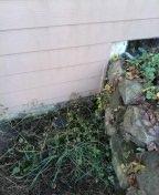 Salem, OR - Tigard, sewer line, sewer inspection.