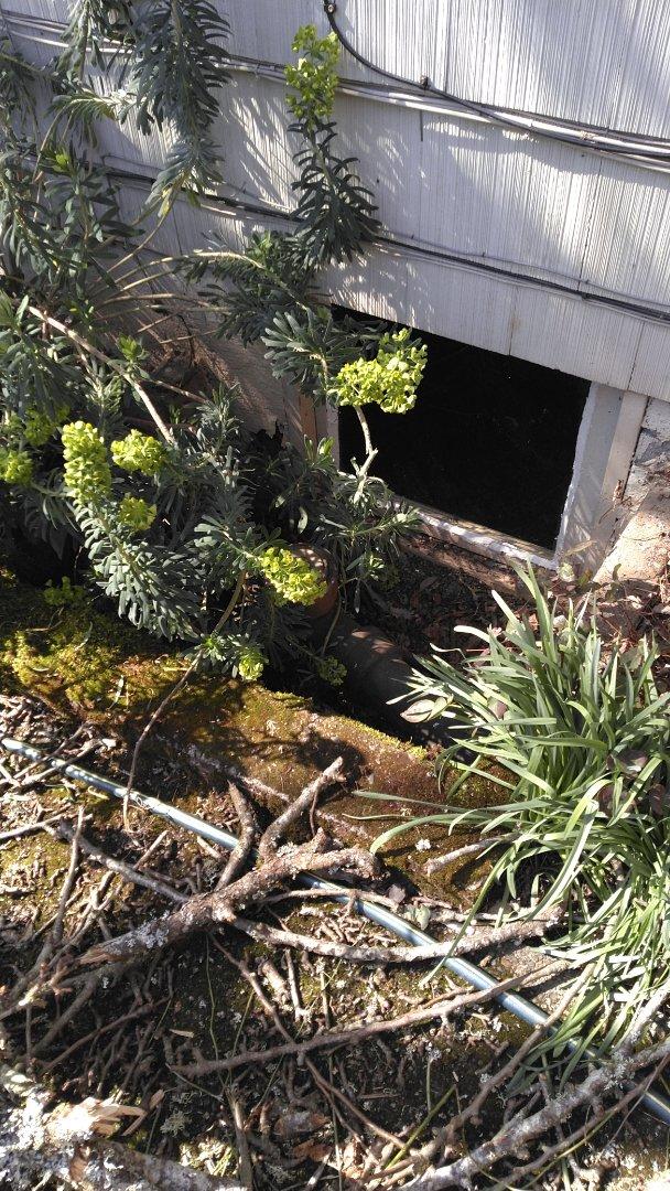 Hillsboro, OR - West linn, sewer line, sewer inspection.