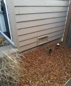 Hillsboro, OR - Hillsboro, sewer line, sewer inspection.