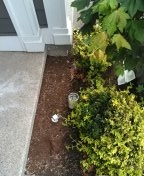 Tigard, OR - Tigard, sewer line, sewer inspection