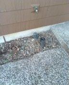 Beaverton, OR - Hillsboro, sewer line, sewer inspection.