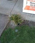 Hillsboro, OR - Beaverton, sewer line, sewer inspection