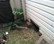 Forest Grove, OR - Forest grove, sewer line, sewer inspection.