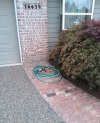 Cornelius, OR - Portland, sewer line, sewer inspection.