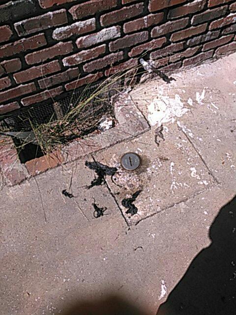 Arcadia, CA - Sewer blockage