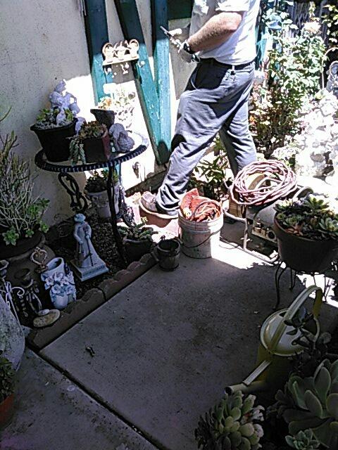 Tustin, CA -  Snake kitchen sink