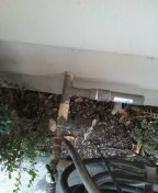 Huntington Beach, CA - Check for leak in backyard