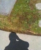 Rowland Heights, CA - Leak in ground possible water main leak / toilet repair
