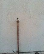 Montebello, CA - New hose bib
