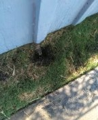 Santa Ana, CA - Hidrojetted kitchen drain